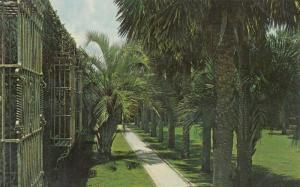 GEORGETOWN COUNTY, South Carolina, 50-60s; Garden Court of Atalaya