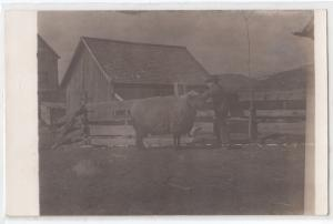 RPPC, Large Sheep and a Man