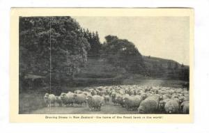 Droving sheep in New Zealand , 20-40s #1/3