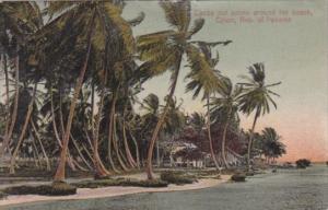 Panama Colon Cocoanut Palms Around The Beach