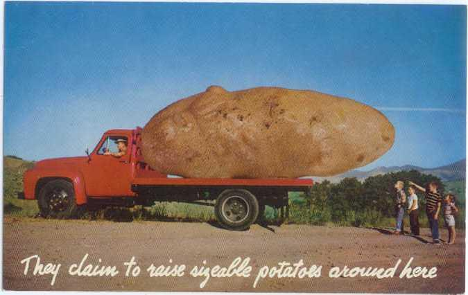 we grow em big here potatoes exaggeration card hippostcard we grow em big here potatoes exaggeration card