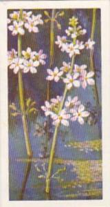 Brooke Bond Tea Trade Card Wild Flowers No 9 Water Violet