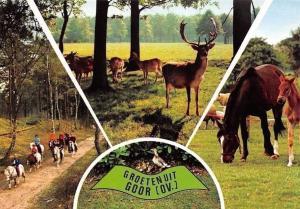 Netherlands Groeten uit Goor Ov. Antelope, Riding Horses Promenade Animaux