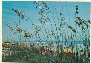 Florida Sea Oats and Sand Dunes