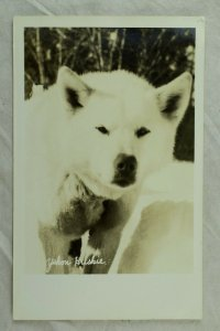 Lot of 12 RPPC Alaska & Yukon Animals Vintage Postcards P108