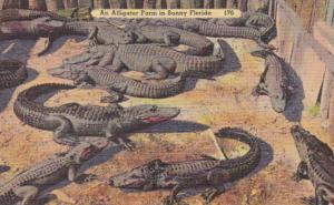Florida Typical Alligator Farm