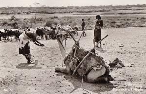 Real photo postcard Africa Ethiopia Meta Hara Etou Tribe natives camel & goats