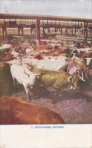 Illinois Chicago Cattle Pens Union Stockyards
