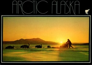 Alaska Midnight Sun Mushing Dog Sled Team