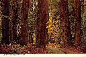 USA Autumn Among the Redwoods in Humboldt State Park California