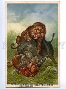 158707 LION Hunt BULL vintage Japan Colorful Postcard