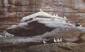 Excursion boats pass close to the cliffs, study of birds,  Perce, Quebec, Can...