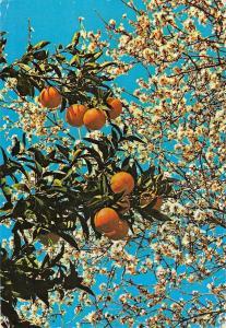 B96531 algarve portugal renda de flores