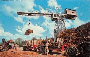 Hoisting Sugar Cane Barbados West Indies Unused