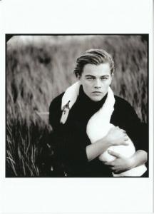 Leonardo DiCaprio with a Swan in 1997 by Annie Leibovitz Postcard