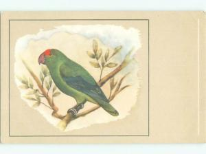 foreign Old Postcard BEAUTIFUL ABYSSINIAN LOVE BIRD AC3558