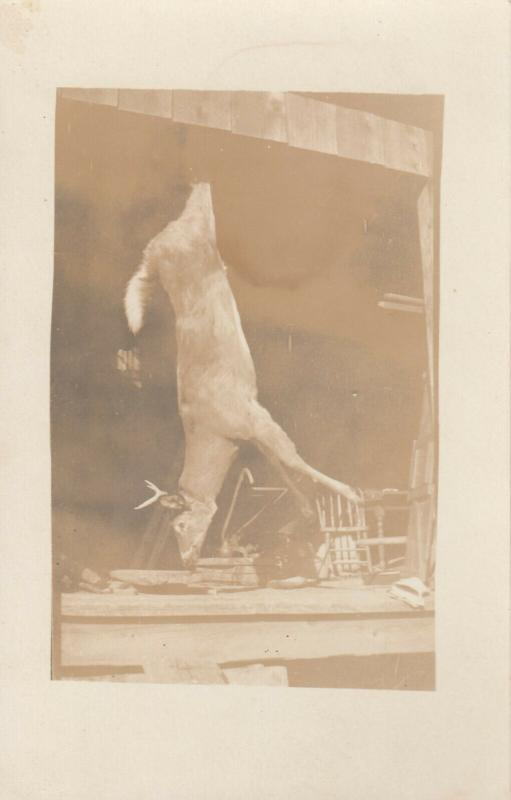 RP: Deer hanging from porch by back legs, 1900-10s