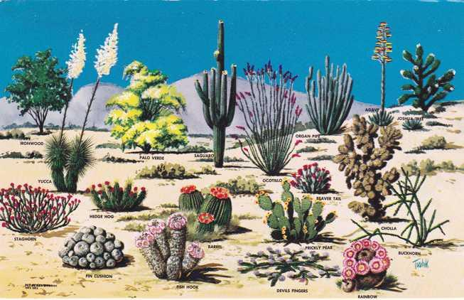 Cacti and Desert Flora - Flowers - The Great Southwest