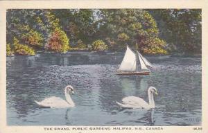 Swans , Public Gardens, Halifax , Nova Scotia, Canada , 30-50s