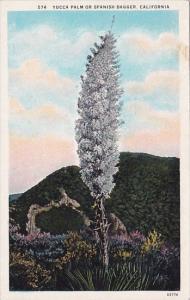California Southern California Yucca Palms Or Spanish Dagger