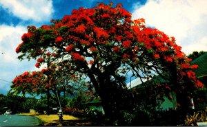 Hawaii Flowers Royal Poinciana