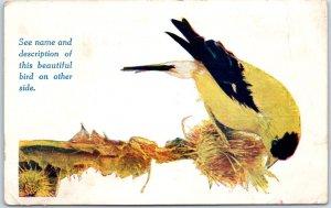 Vintage 1910s Bird Postcard Goldfinch Successful Farming Des Moines IA Unused