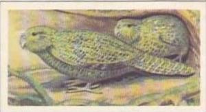 Brooke Bond Vintage Trade Card Wildlife In Danger 1963 No 37 Kakapo Or Owl Pa...