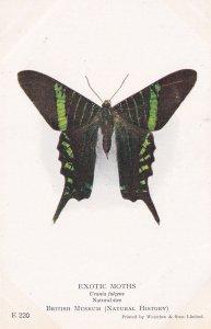Urania Fulgens Uraniidae Mexican Exotic Moths Natural History Museum Postcard