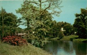 Leland, Mississippi, MS, Beautiful Deer Creek, 1955 Chrome Vintage Postcard d308