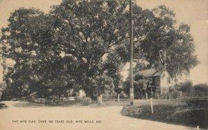 WYE MILLS , Maryland, 1930s ; The Wye Oak