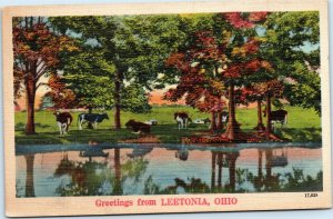 postcard Ohio - Greetings from Leetonia - cows under trees by river - NYCE