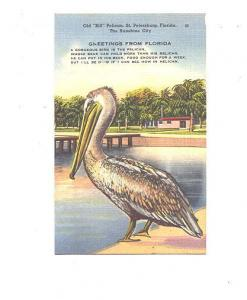 Old Bill, Pelican and Poem, St Petersburg, Florida, Sun News Co