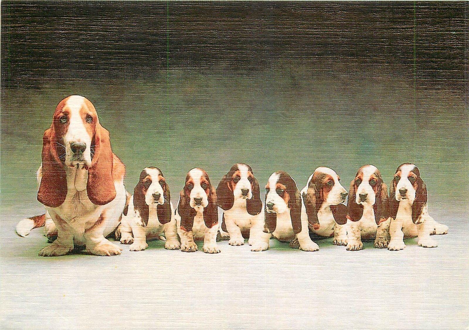 Hush Puppies Dogs Hippostcard