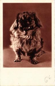CPA AK Pekingese DOGS (729397)