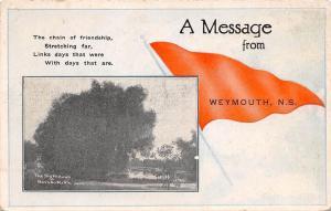 WEYMOUTH NOVA SCOTIA CANADA MESSAGE POSTCARD BIG WILLOWS AT NEVADA MILLS 1910s
