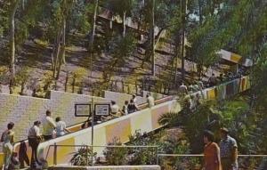 California San Diego Moving Stairway San Diego Zoo Balboa Park