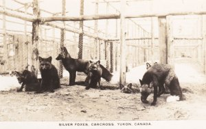 RP; Carcross, Yukon, Canada, 00-10s ; Silver Foxes