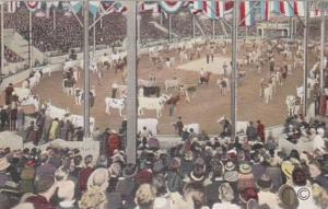 Iowa Waterloo Parade Of Champion Cattle In Hippodrome Dairy Cattle Congress 1938