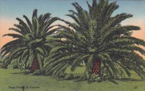 Florida Sago Palm In Florida