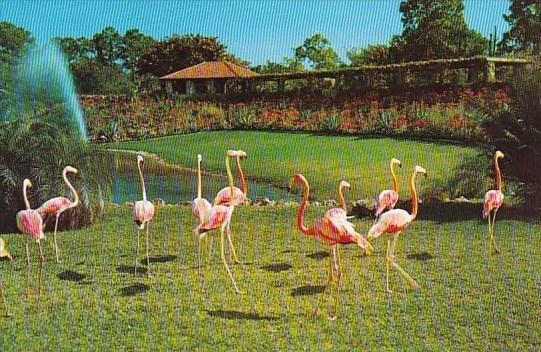 Florida Miami Florida Flamingos Parrot Jungle