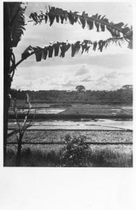 Dutch Indies Indonesia Nederlands Indië Batavia 1943 REAL PHOTO 01.38