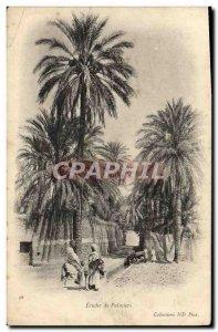 Old Postcard Palms Studies