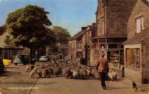 Vintage Yorkshire Postcard 1967 Shepherd with Sheep Grassington Wharfedale AI9