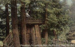 SANTA CRUZ , California , 00-10s ; Tree Platform , Big Tree Grove