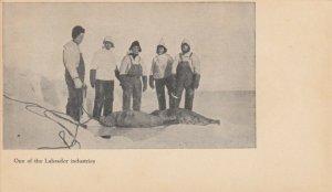 LABRADOR , Canada , 1900-10s ; Seal Hunting