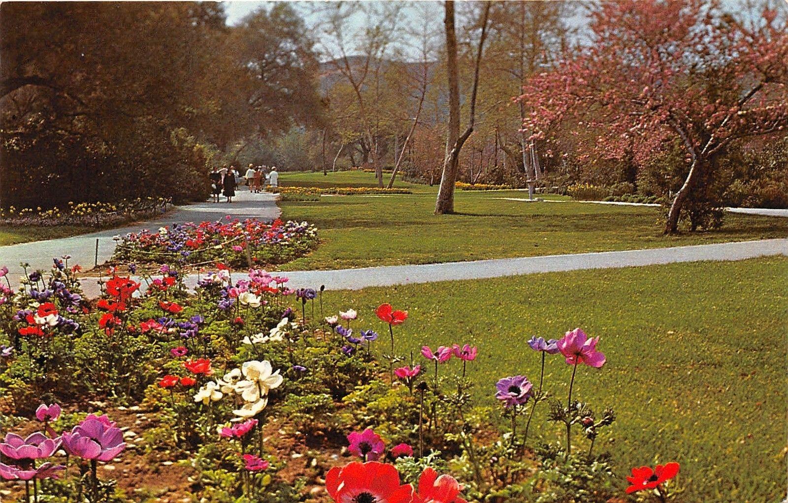 La Canada California~Descanso Gardens~Ladies Observing Flowers~1960s ...