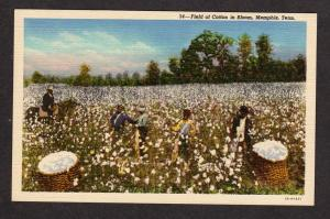 TN African American Picking cotton Memphis Tennessee Tenn Postcard Horse PC