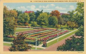 Rose Garden View at Maplewood Park, Rochester, New York - Linen