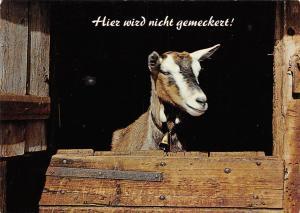 Goat Capra Hier wirz nicht gemeckert! Ferbkarten Schoenes Oesterreich
