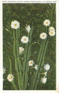 Night Blooming Cactus Cereus Peruvianus in Florida Vintage Postcard Kropp F247